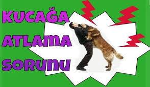 Köpeğinizin Kapıdaki Zıplamalarını Durdurmak