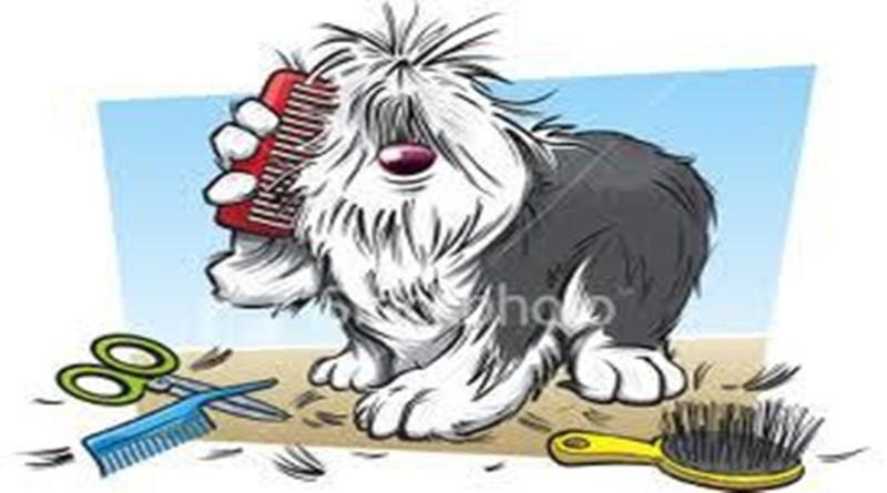Köpeklerde Deri ve Tüy Bakımı