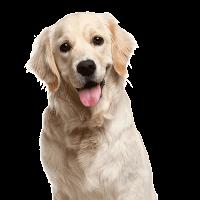 Garantili Köpek Eğitimi