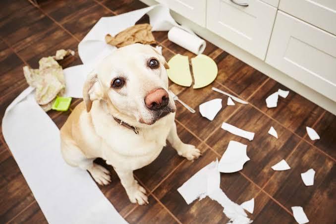 Köpeklerde Davranış Bozukluğuna Yaklaşım