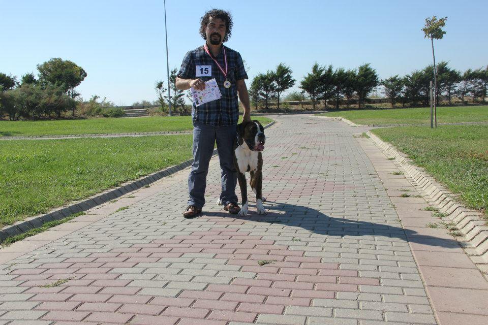 Köpek Eğitim Hizmetimiz