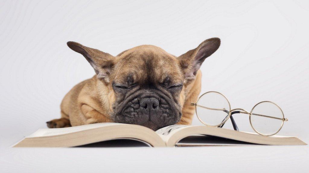Köpeklerde İleri ( Tasmasız ) İtaat Eğitimi