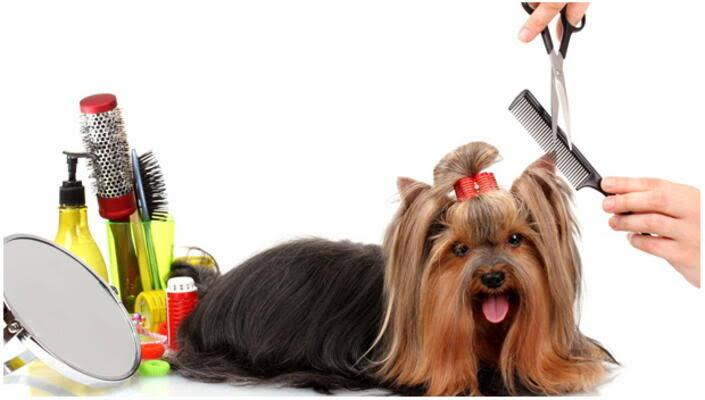 Kedinizi ve Köpeğinizi Tıraş Ettirirken Dikkat Edin !