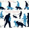 Köpeklerde Temel ( TASMALI ) İtaat Eğitimi